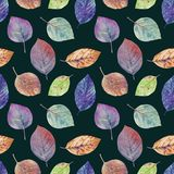 Autumn leaves of different colors drawn watercolor. stock illustration