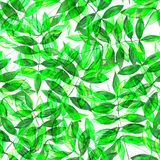 Seamless watercolor green leaves pattern. With white background Stock Images
