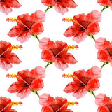Seamless watercolor hibiscus pattern Stock Image