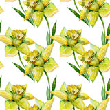 Seamless watercolor illustration of daffodils. In green grass on white background. Banner with springtime motif may be used as background texture, wrapping Stock Photo