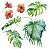 Seamless watercolor illustration of tropical leaves Stock Images