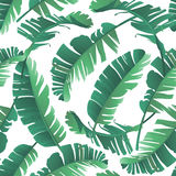 Seamless watercolor illustration of tropical leaves, jungle. Royalty Free Stock Photo