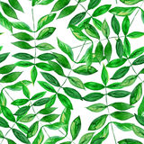 Seamless watercolor leaves pattern. Seamless watercolor green leaves pattern with white background Stock Photo
