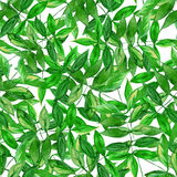 Seamless watercolor leaves pattern with white background. Seamless watercolor green leaves pattern with white background Stock Photography