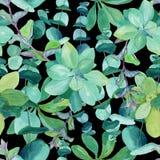 Seamless watercolor pattern of baby blue eucalyptus on black stock illustration