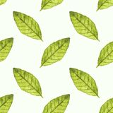 Seamless watercolor pattern with bayleaf on the Stock Image