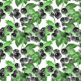 Seamless watercolor pattern with black currant. Floeral backgrou. Nd. Berries Royalty Free Stock Photography