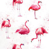 Seamless watercolor pattern with flamingo vector illustration