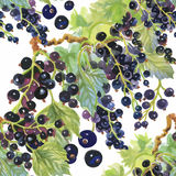 Seamless watercolor pattern with leafs and berries Royalty Free Stock Images