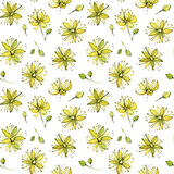 Seamless watercolor pattern of linden blossom royalty free illustration