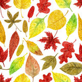 Autumn watercolor pattern Stock Photography