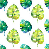 Seamless watercolor pattern with monstera leaves Stock Photos