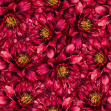 Seamless watercolor pattern with peonies Royalty Free Stock Photos