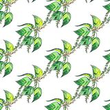 Seamless pattern with poplar green leaves on white background. Seamless watercolor pattern with poplar green leaves on white background. Blossom tree stock illustration