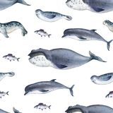 Seamless watercolor pattern about sea fauna. marine animal. Dolphin, whale, fish and seal on white background. Seamless watercolor pattern about sea fauna stock images