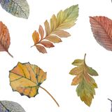 Elegant autumn leaves for different color design. Seamless watercolor pattern of colorful leaves. vector illustration