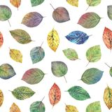 Elegant leaves for design. Colorful autumn leaves. royalty free illustration