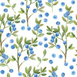 Seamless watercolor pattern with twigs of blueberry. Hand-drawn Royalty Free Stock Photo