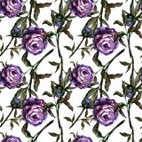Seamless watercolor realistic botanical pattern purple peony small blooming stock illustration