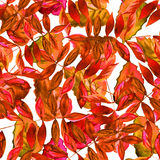 Seamless watercolor red leaves pattern. With white background Royalty Free Stock Photography