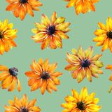 Seamless watercolor texture of Rudbeckia flowers. Watercolor illustration. Flowers for design. royalty free illustration
