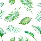 Seamless watercolor tropical pattern. Seamless watercolor pattern with green tropical leaves and palm branches isolated on white background Stock Photography