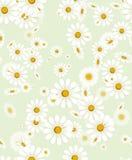 Seamless white chamomile flower texture Stock Photo