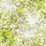 seamless white för lila modell Arkivfoton