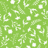 Seamless white and green pattern with wild flowers. Vector illustration. Stock Photography