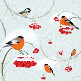 Seamless winter background with bullfinch Stock Photos