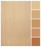 Seamless Wood Texture With Colored Palette Guide Stock Images