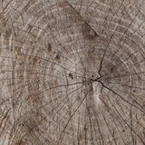 Seamless wooden background. Old stump in the section Royalty Free Stock Images