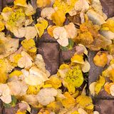 Seamless yellow autumn leaves on the sidewalk tiles. background. Seamless yellow autumn leaves on the sidewalk tiles. background, nature stock photography