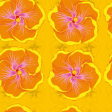 Seamless yellow background with orange hibiscus flowers. Royalty Free Stock Images