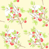 Seamless yellow pattern. With red berry and green leaves Stock Photography