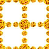Seamless yellow pattern of flowers tagetes patula stock photos