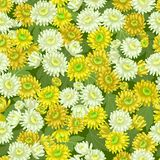 Seamless yellow white chrysanthemum backgrounds Royalty Free Stock Photography