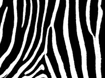 Seamless zebra skin pattern fur Stock Photography