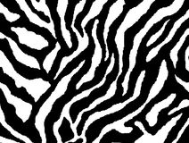 Seamless zebra skin pattern fur. Print Stock Images