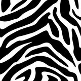 Seamless zebra texture background Stock Images