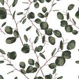 Seamlessr wzór z eukaliptusem Ręka malował kwiecistego ornament z srebnym dolarem i dziecko eukaliptusem, siającym royalty ilustracja