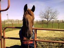 Seamus. Horse outdoors on farm Stock Photography