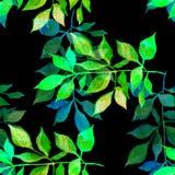 Seanless bakgrund Den dekorativa växt- modellen med vattenfärghanden målade ljusa färgrika sidor stock illustrationer