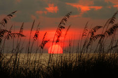 Seaoat Sunset. Colorful Pass-a-grille Florida sunset with seaoats. Florida Gulf Coast Royalty Free Stock Photo