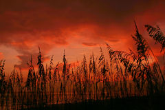Seaoat Sunset Stock Photo