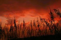 Seaoat Sunset. Seaoats framing a vivid sunset. Madeira Beach Florida Stock Photo