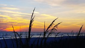 A SeaOat Sunset Stock Image