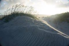 Seaoats balayés par le vent sur les banques externes dunaires d'oceanside photos libres de droits