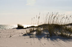 Seaoats Royalty Free Stock Photo