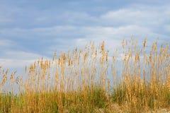 Seaoats na duna de encontro a s azul Imagens de Stock